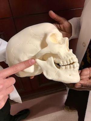 Dr. Nora Odingo and Dr. David Lam Highlight TMJ on Skull